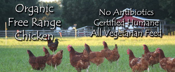 Buy Organic Free Range Chicken Now!